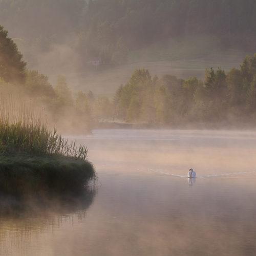 Paysage - Nature - Top 10 N°4 - Playoffs de la Photo 2018