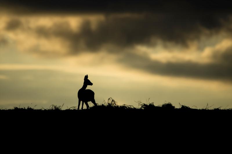 Animalier - Top 10 N°10 - Playoffs de la Photo 2020